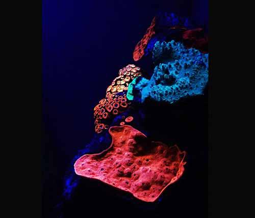 发光珊瑚组成的彩虹:五彩缤纷