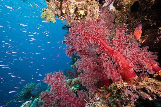 红珊瑚的鉴赏及收藏