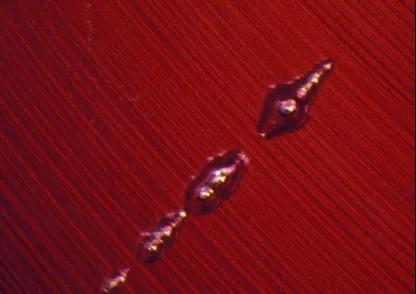 (焰熔法合成红宝石中的弧形生长纹和气泡)