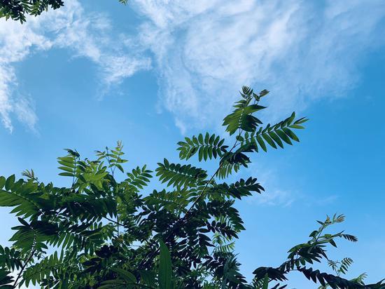 """重庆开启高温模式 天空再现经典""""重庆蓝""""[组图]"""