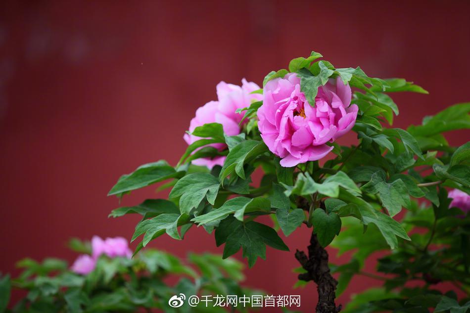 赵忠祥夫人在众人搀扶下进灵堂,全程掩面流泪