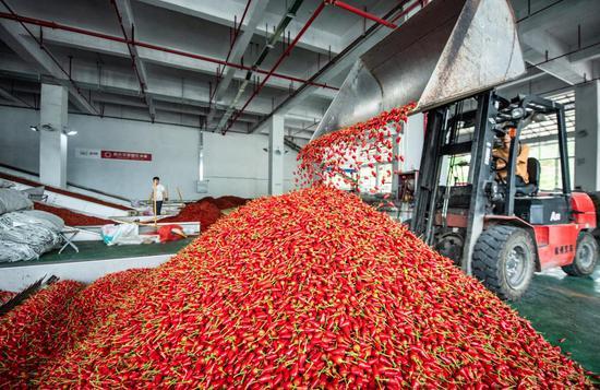工人在遵义市新蒲新区一家辣椒加工企业内转运辣椒(2020年8月13日摄)。新华社记者陶亮摄