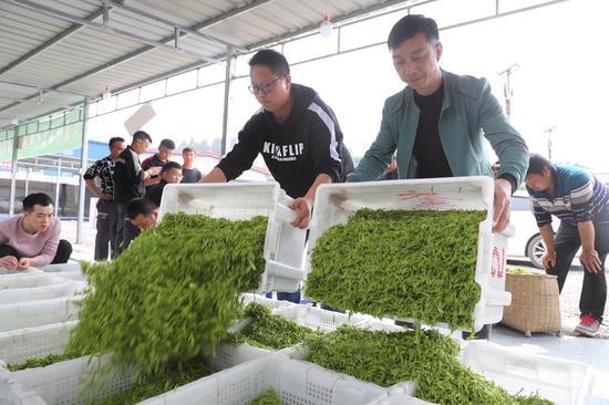 3月17日,茶农们在遵义市余庆县花山苗族乡回龙村茶青交易市场交易茶青。新华社记者刘续摄
