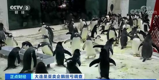靠52只企鹅收入2200万?大连圣亚遭监管问询