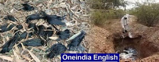 印度一地同一天现多起乌鸦群体死亡事件 死因成谜(夜读头条网)