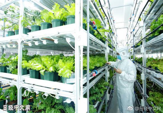松下在华蔬菜工厂产量将增至3倍松下