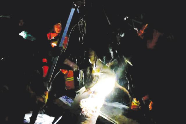 300斤小牛掉到15米深的井中 被消防員救出