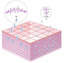 11kDa乙酰化玻尿酸(右)分子量小于常规的透明质酸(左)