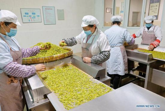Workers process tea leaves at a workshop in Jingning She Autonomous County in Lishui, east China's Zhejiang Province on March 23, 2021. Jingning She Autonomous County is the origin of Huiming tea. Locals now are busy harvesting and processing tea in spring. (Photo by Li Suren/Xinhua)