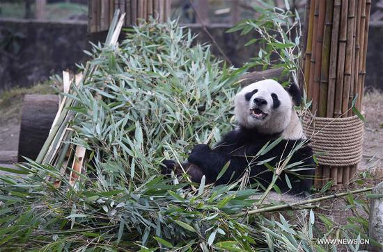 in pics nursing home for aged pandas in sw china 39 s sichuan china news sina english. Black Bedroom Furniture Sets. Home Design Ideas