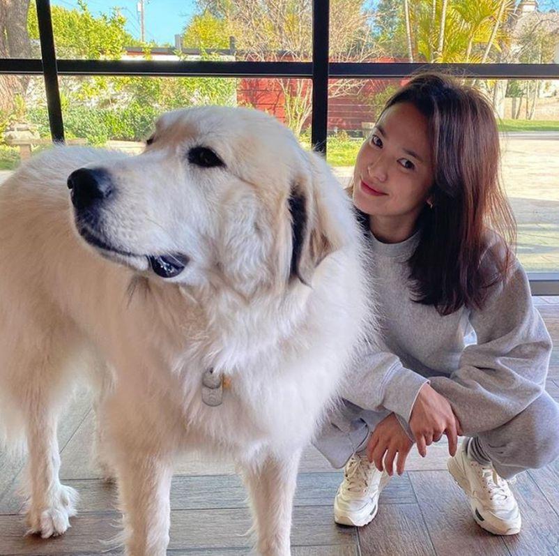 38岁宋慧乔近照曝光 一身运动装与爱犬合影笑容超甜