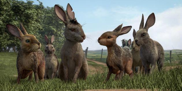 《兔子共和国》