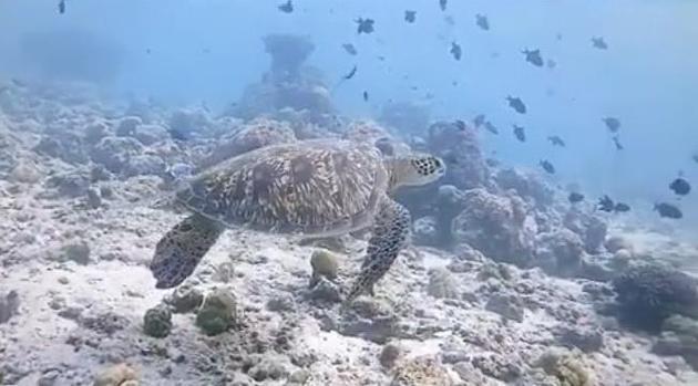 海龟在海里漫游