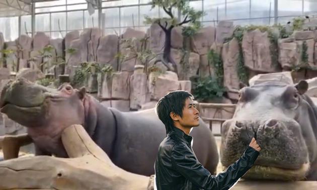韩寒认养动物园两只河马 特殊时期P图合影