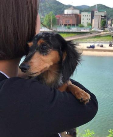 钟铉的爱犬