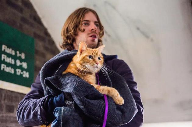流浪猫鲍勃走了。。。。