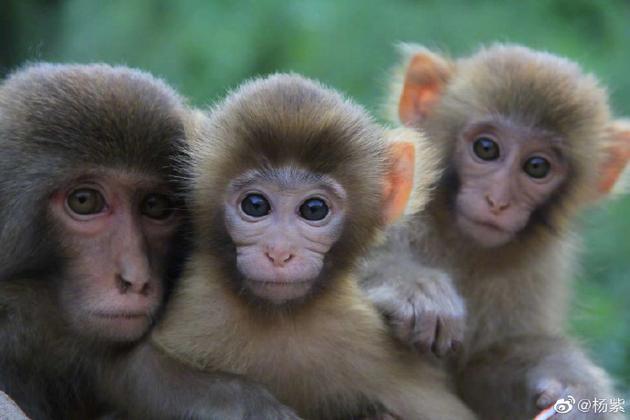 小猴子照片