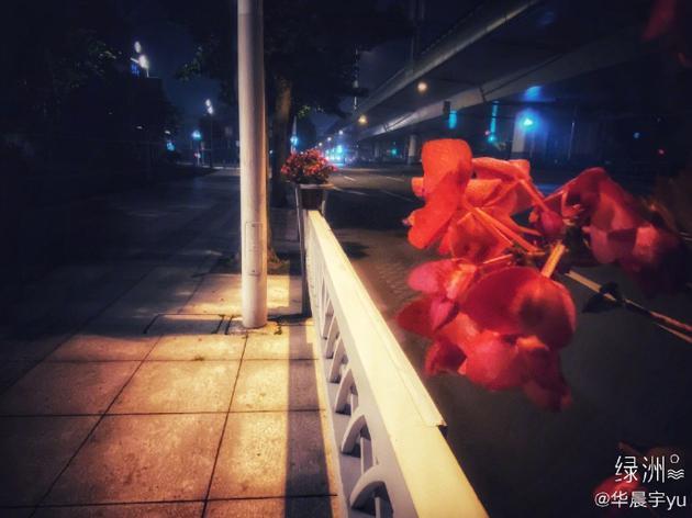 小可爱上线!华晨宇绿洲深夜晒路边花花意境十足