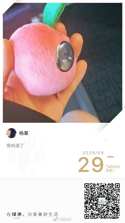 杨幂绿洲发文