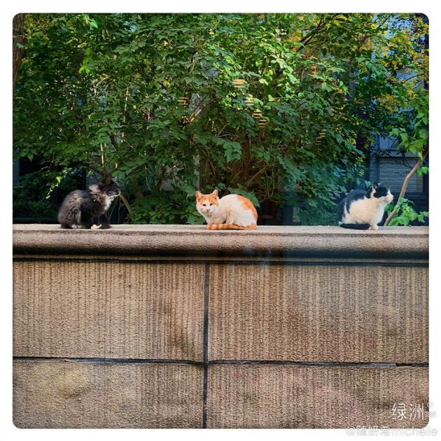 围在陈妍希院子的猫