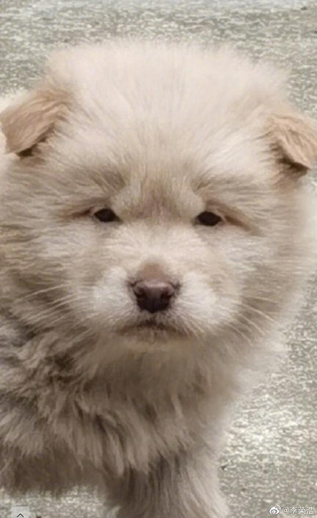 李荣浩晒豆豆眼小狗照 网友调侃到李荣浩是你吗?