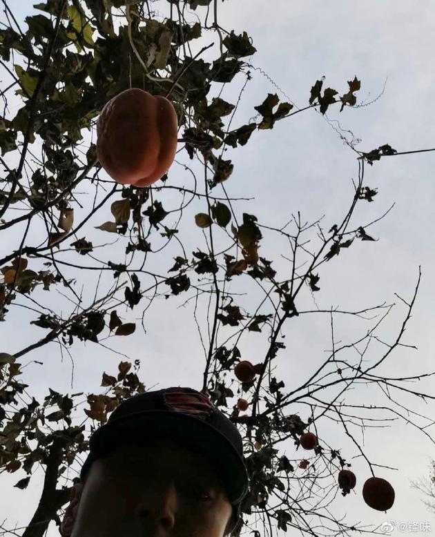 塌过的院子里长出果实 谢霆锋:马上研发柿子饼