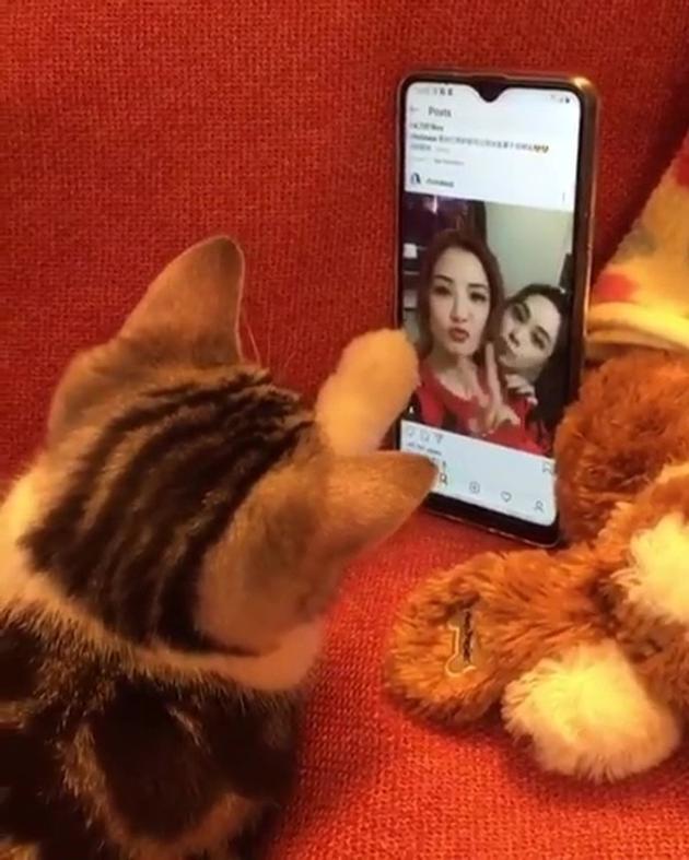 保姆给阿sa家的猫咪望主人的行态