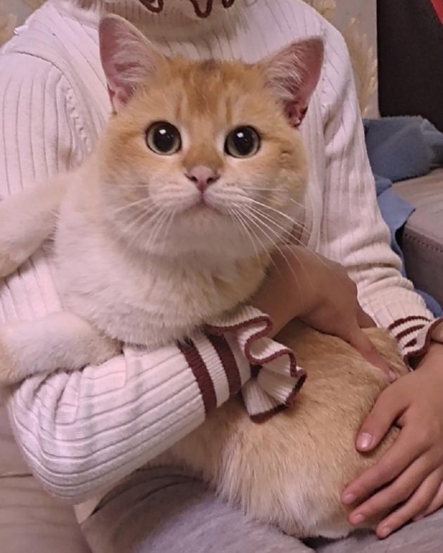 杨超越的猫