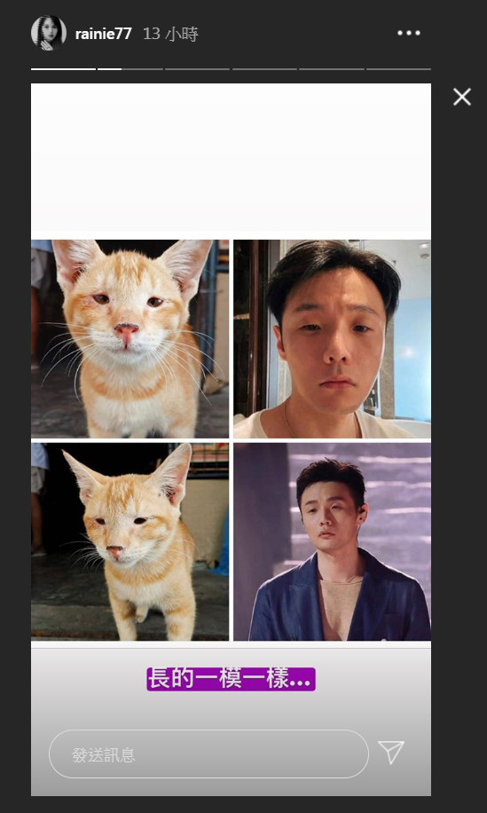 杨丞琳认证李荣浩像单眼皮幼猫咪