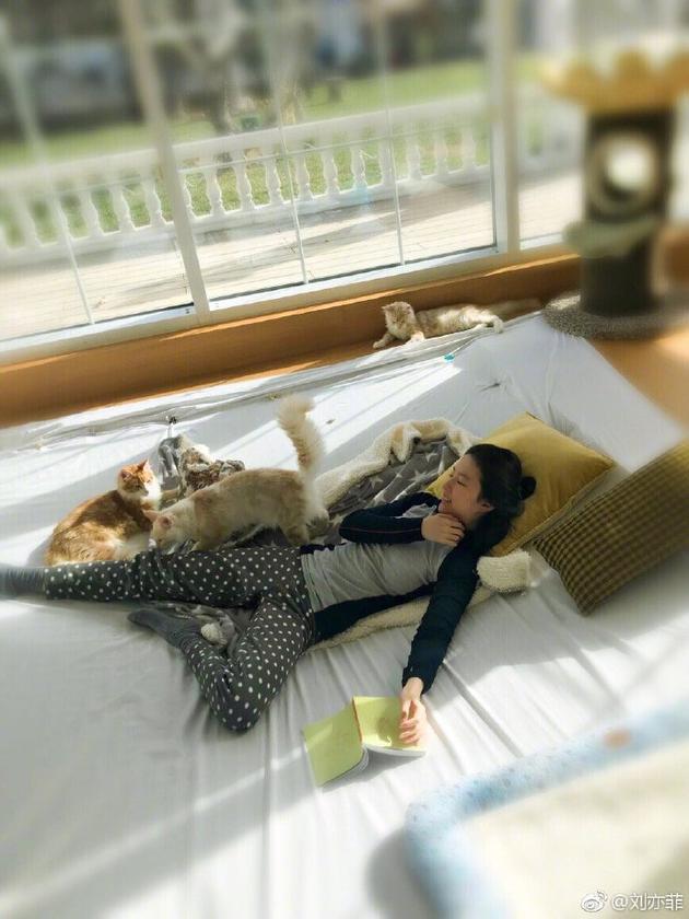 刘亦菲被猫咪环绕
