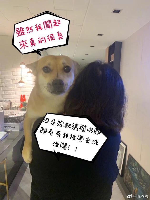 陈乔恩喜欢宠不想洗澡