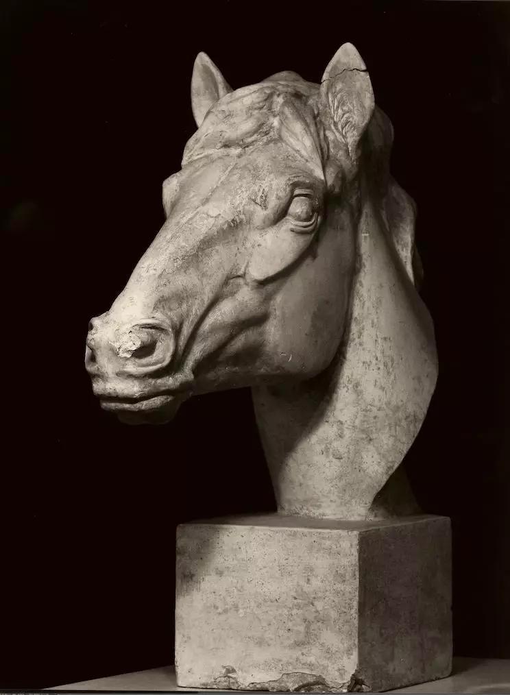 馬頭教具 / 傅維安 / 60 × 60 cm / 石膏 / 1975