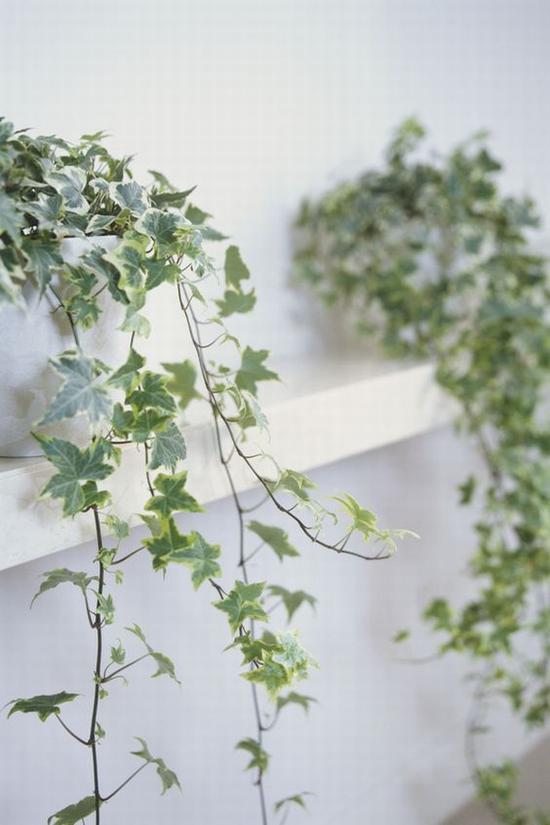 绿植也要充分利用 图片源自www.goodhousekeeping.com