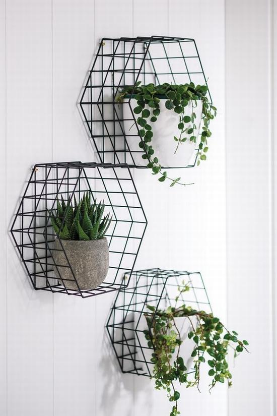 绿植上墙才时髦 图片源自pinterest