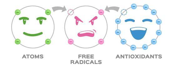 顶流成分大聚首 是时候为抗氧化正名了插图(2)