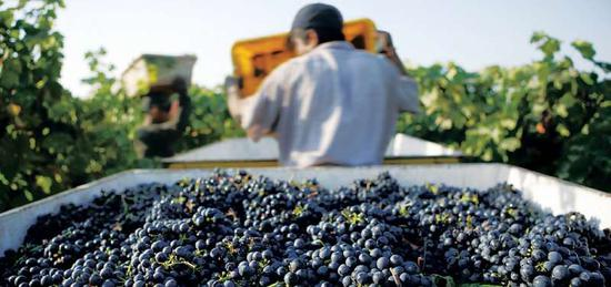 图片来源:California Wines