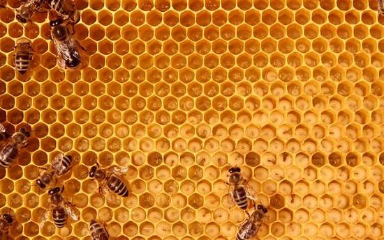 What's the use of honey besides fattening?插图2