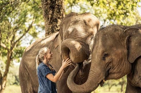 """泰国清莱""""金三角象园安纳塔拉度假酒店""""""""陪亚洲象散步"""""""