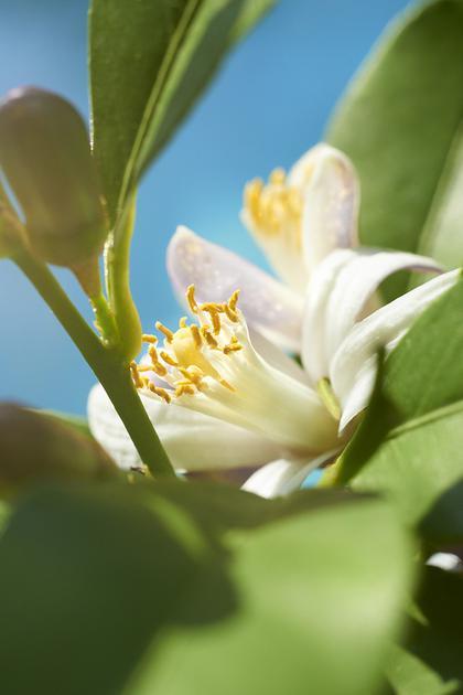 沐浴地中海暖阳 贮满活力能量 宝格丽森林之光男士香水灿亮上市