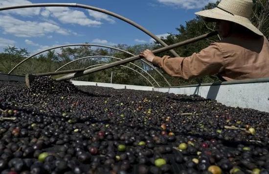 ▲原料图片:一位巴西农民在农场劳作。(法新社)