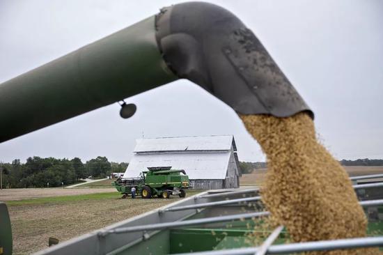 ▲现在人们笑不都雅地认为,中国将很快恢复购买美国大豆。(视觉中国)