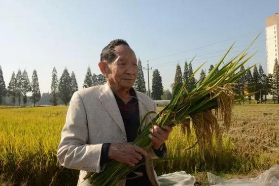 ▲原料图片:2018年10月30日,袁隆平在。位于湖南长沙的第三代杂交水稻幼区测产。(新华社)