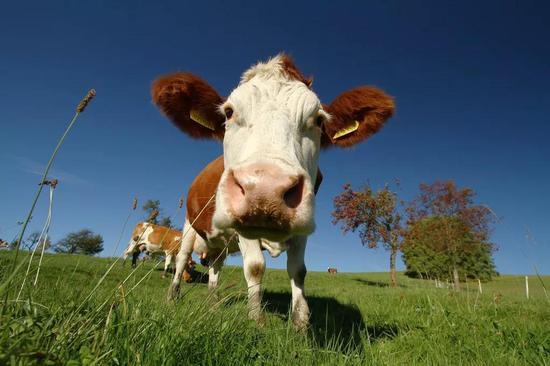 外媒:中国向非法野生动物交易宣战