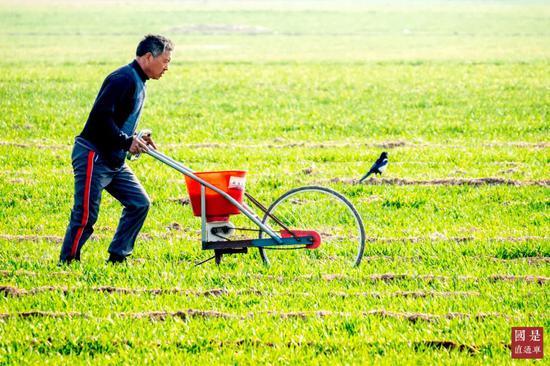 农民在冬幼麦田进走田间管理 中新社发 王子瑞 摄