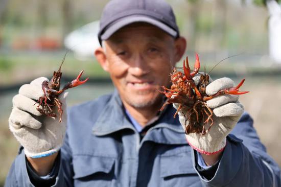 1261万亩小龙虾引争议 要虾还是要稻?