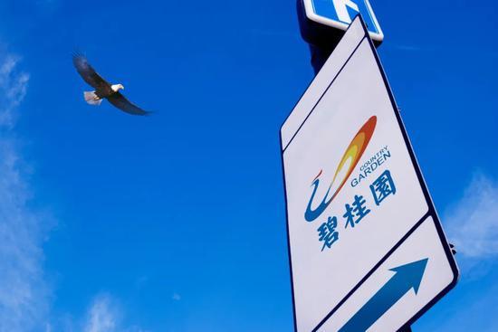 碧桂园连续四年入选《财富》世界500强 多项指标位居前列