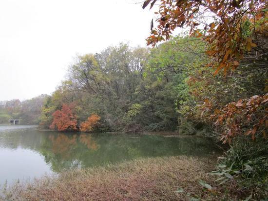 苏宁佛手湖项现在已被圈占的湖泊和林地