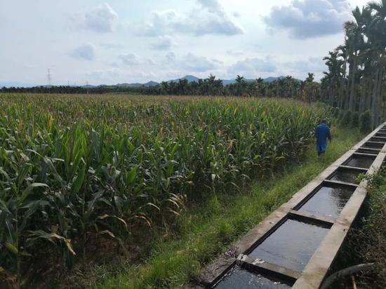 高标准农田建设已建成6.4亿亩旱能灌、涝能排的优质良田,图为国家南繁科研基地的一处高标准农田。(乔金亮摄)