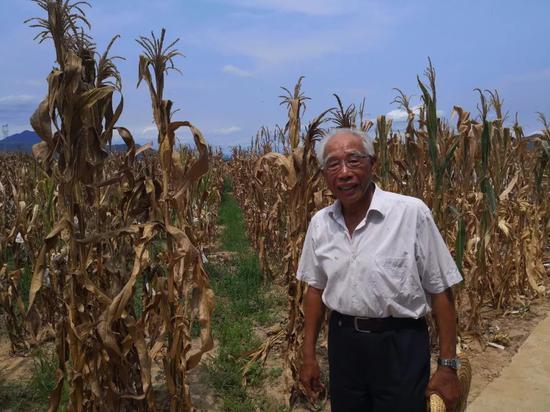 从事玉米科研53年来,玉米育种家程相文一直坚持南繁、坚持下田。(乔金亮摄)