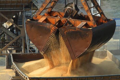 一批从澳大利亚进口的酿酒大麦在中国码头卸运。(新华社)